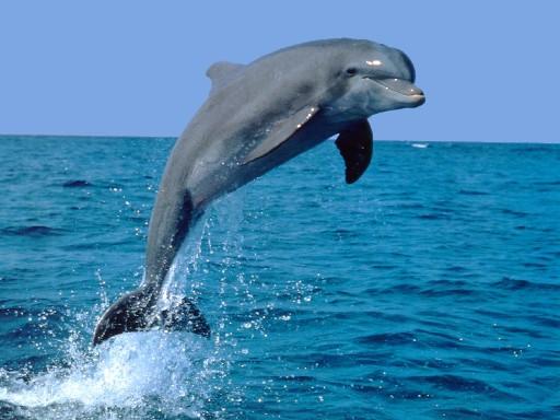 Pesca, alle Eolie dissuasori acustici per allontanare i delfini