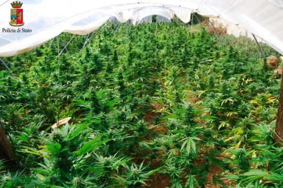 Mazara del Vallo, scoperta piantagione di cannabis: arrestato un 40enne