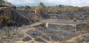 """Incendi, Legambiente Sicilia: """"Manca la vigilanza sul territorio"""""""