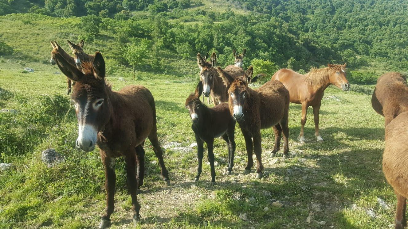 Parco dei Monti Sicani in agonia. La denuncia del WWF Sicilia