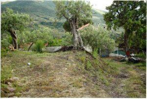 San Mauro Castelverde, finanziato progetto per la frazione di Borrello
