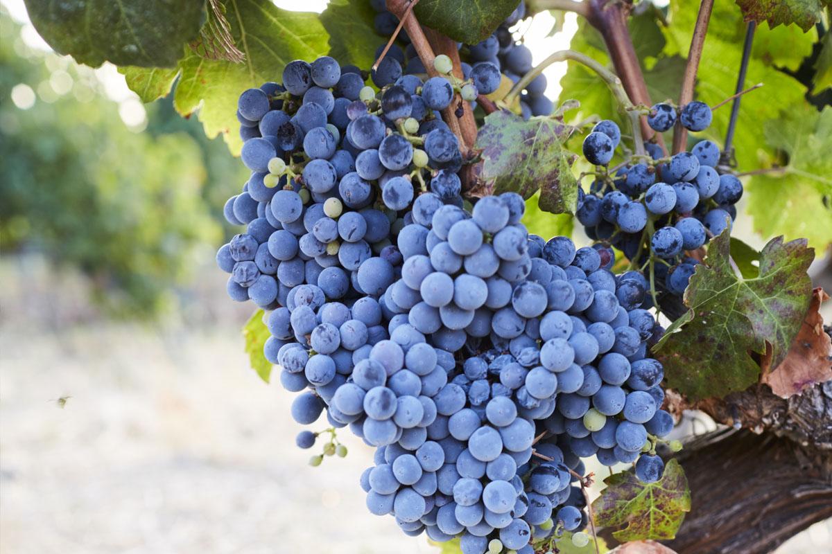 Cantina Palmeri, il vino figlio dell'amore di Ueli Breitschmid per la Sicilia