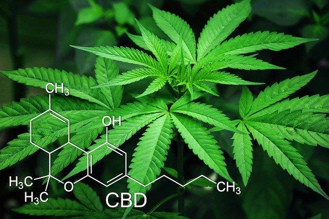 """La cannabis light diventa sostanza """"stupefacente"""""""