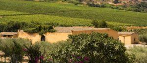 """Vino: Planeta scala la classifica di """"The Most Admired Wine Brands 2021"""""""