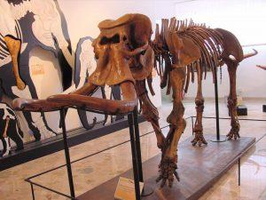 Recuperato Dna da elefante della collezione del Museo geologico Unipa