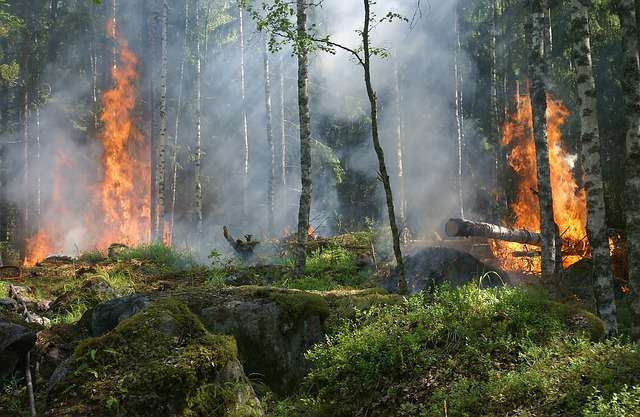 Musumeci in guerra contro incendi
